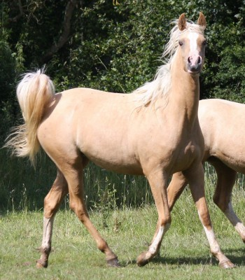 Many quality broodmare offer for sale …