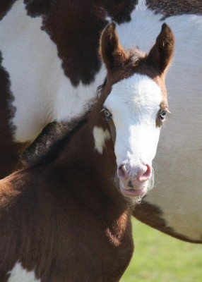 Our foal made in USA …