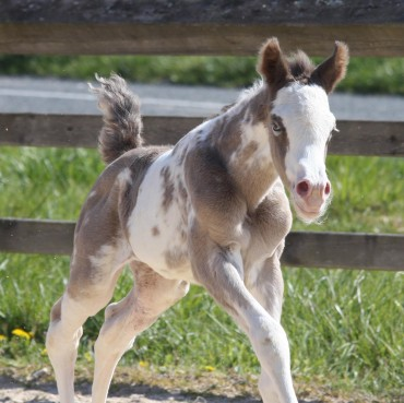 first 2021foal is born..